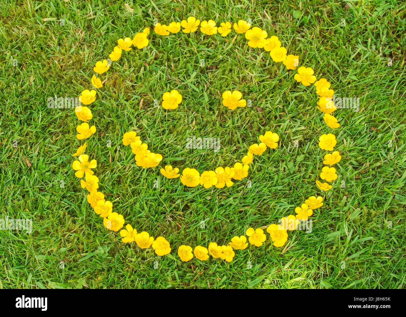 Smiley face made from buttercups - Stock Image