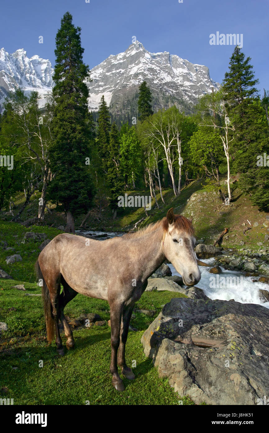 Horse Animal India Landscape Scenery Countryside