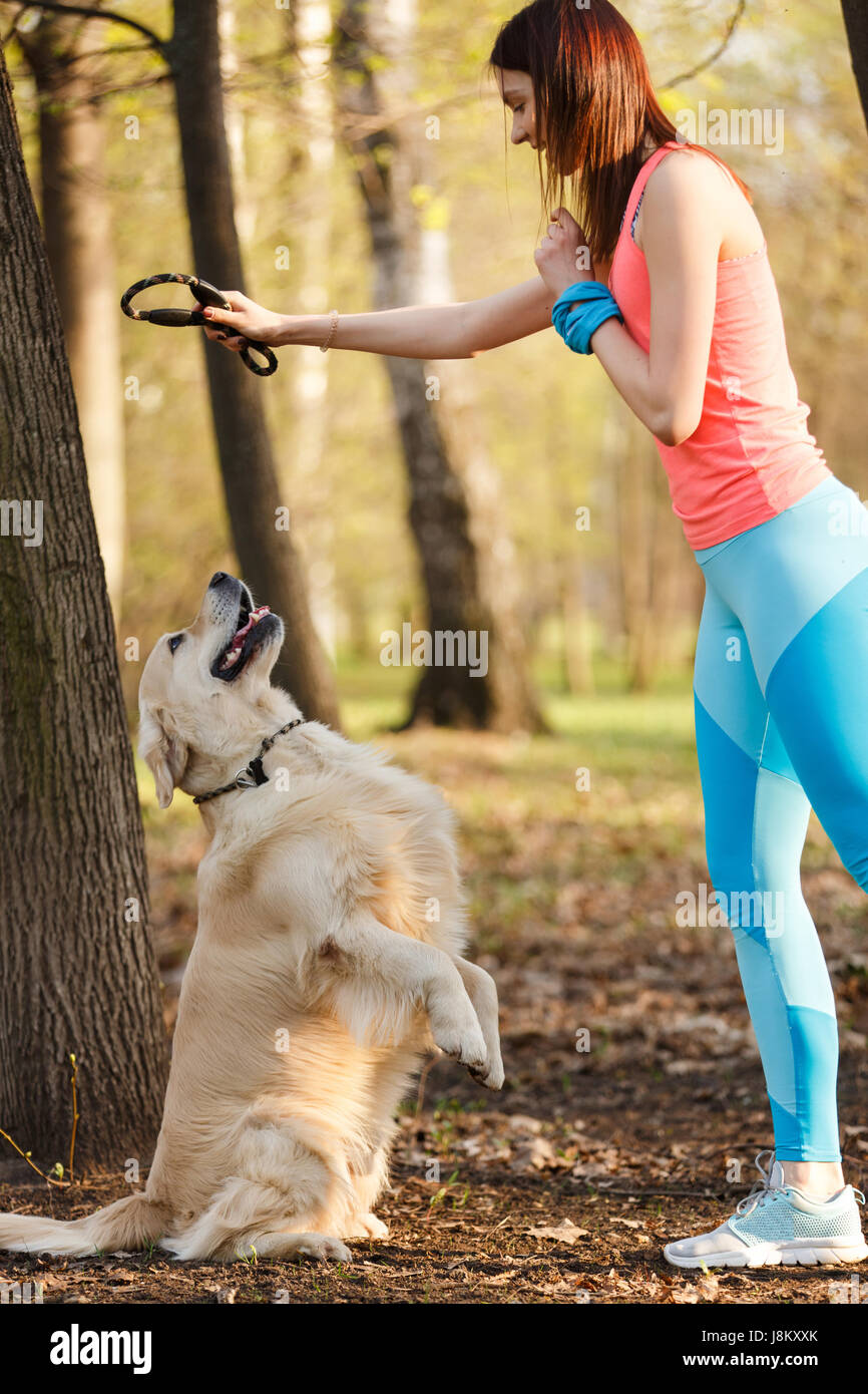 Sports woman training golden retriever - Stock Image