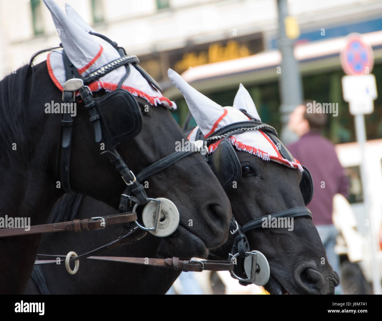 ride, horse, vienna, black, swarthy, jetblack, deep black, austria, carriage, - Stock Image