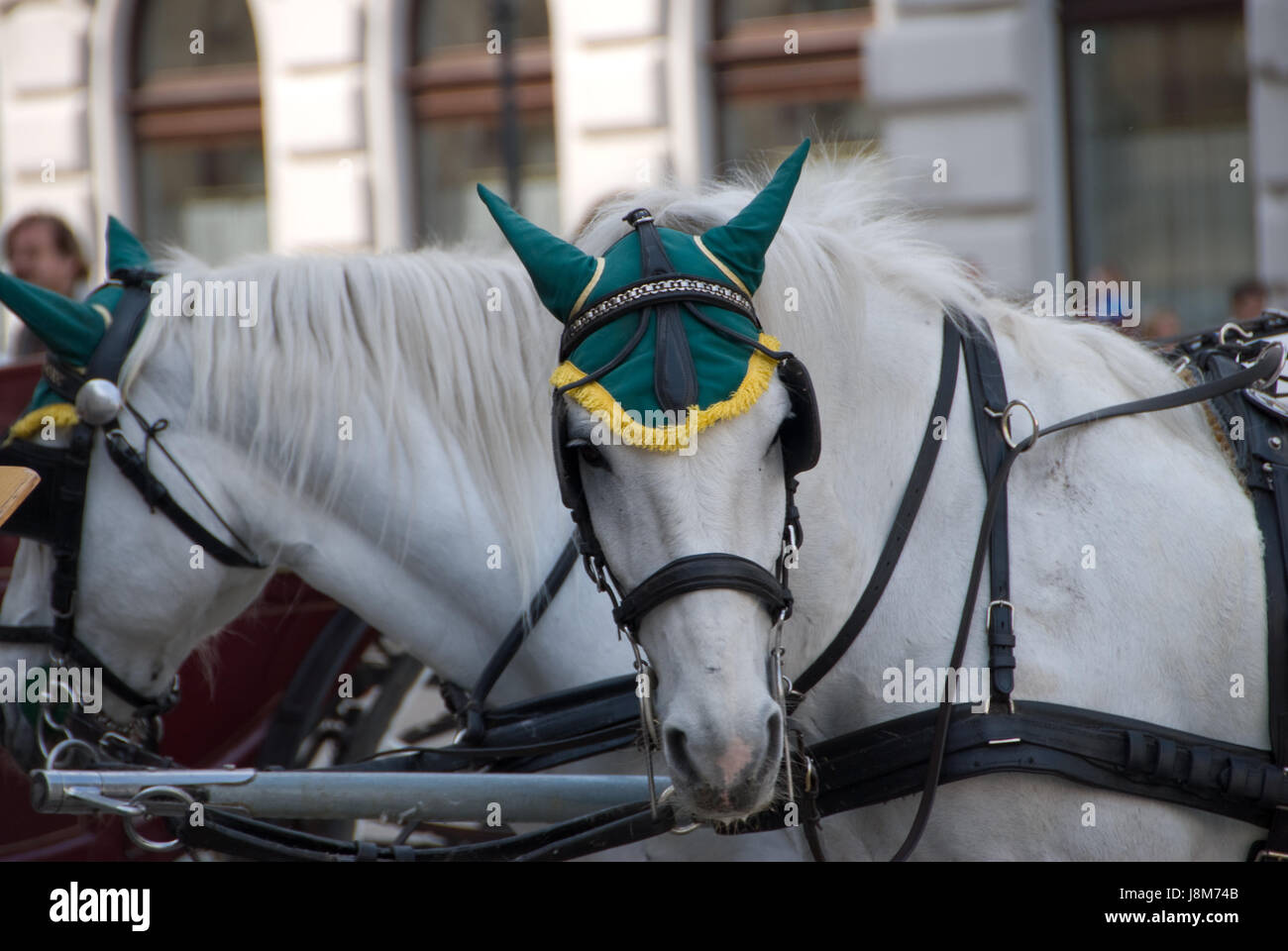 ride, horse, vienna, austria, carriage, coach, bridle, cab, vehicle, means of - Stock Image