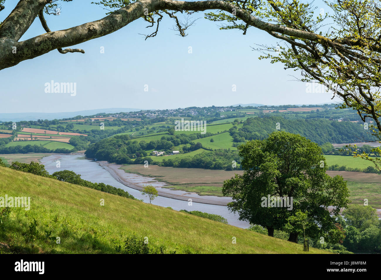 the countryside and river tamar near st.mellion in cornwall, england, britain, uk. - Stock Image