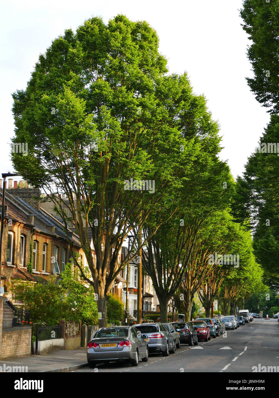 Chestnut Ave, Forest Gate, London E7 Stock Photo