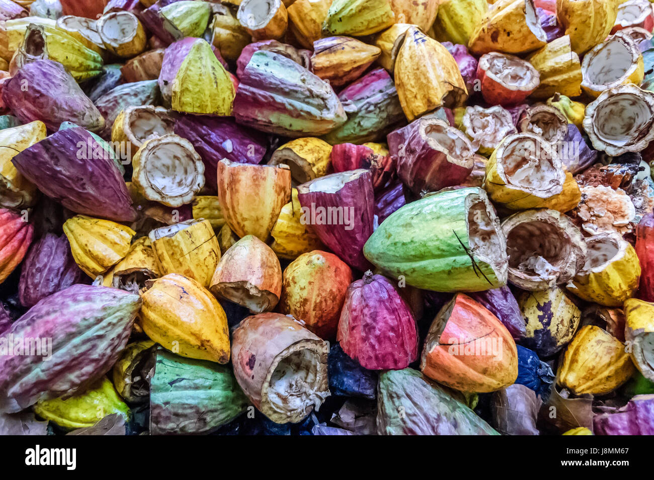 Pile of discarded empty cacao pods after cacao beans have been harvested, Guatemala - Stock Image