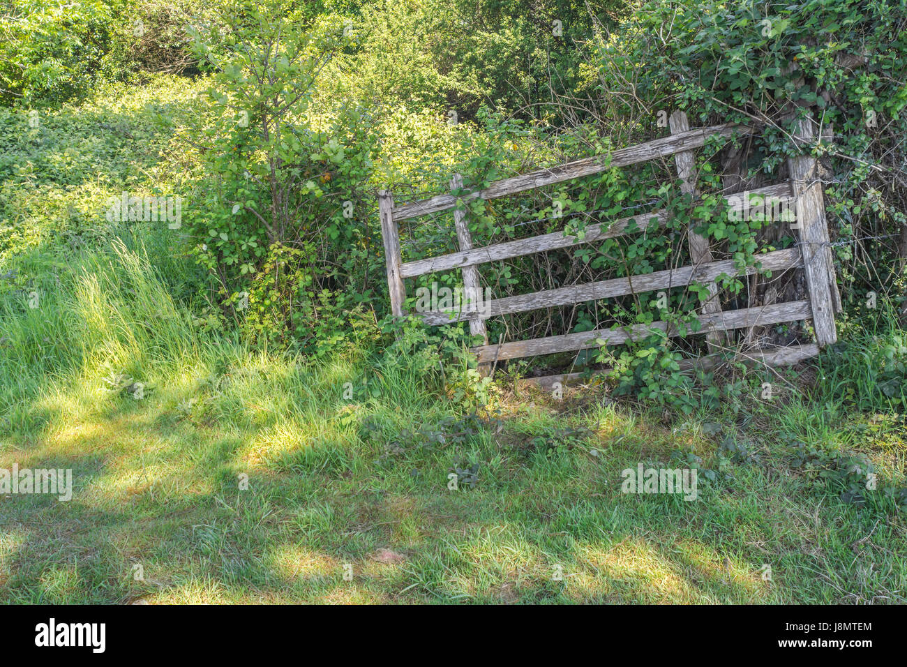 Dilapidated wooden field gate - possible metaphor for 'no restrictions' or obstacles, and 'floodgates - Stock Image