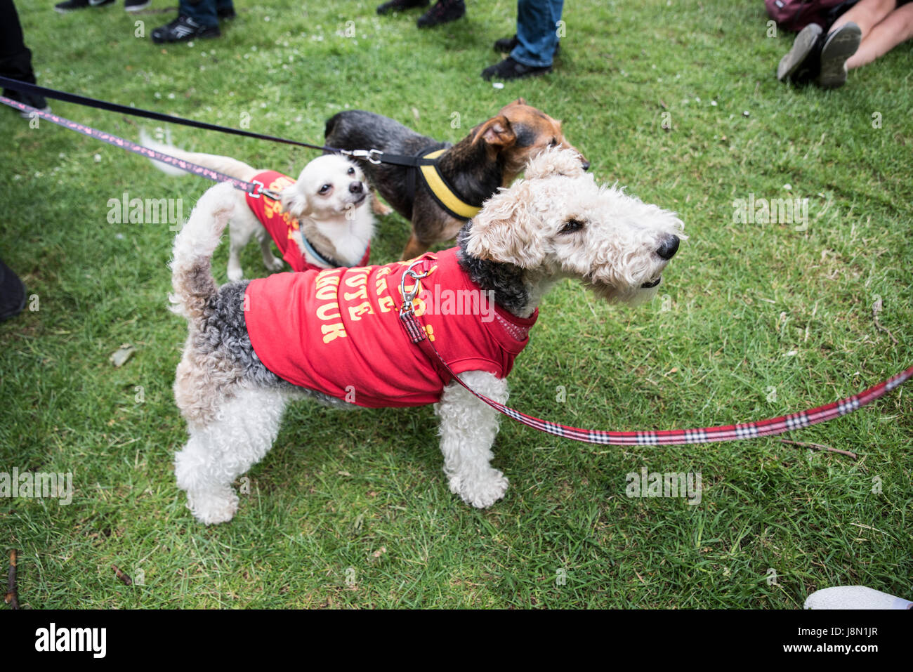 Anti-Fox-Hunting march 29th May 2017 London - dogs are wearing an anti fox hunting costume Credit Anja Riedmann/Alamy Live News & London UK. 29th May 2017. Anti-Fox-Hunting march 29th May 2017 ...