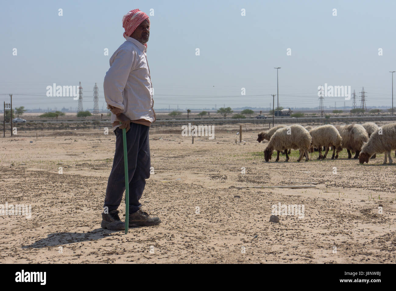 Migrant worker working as a shepherd in Kuwait watching sheep near a motorway. - Stock Image