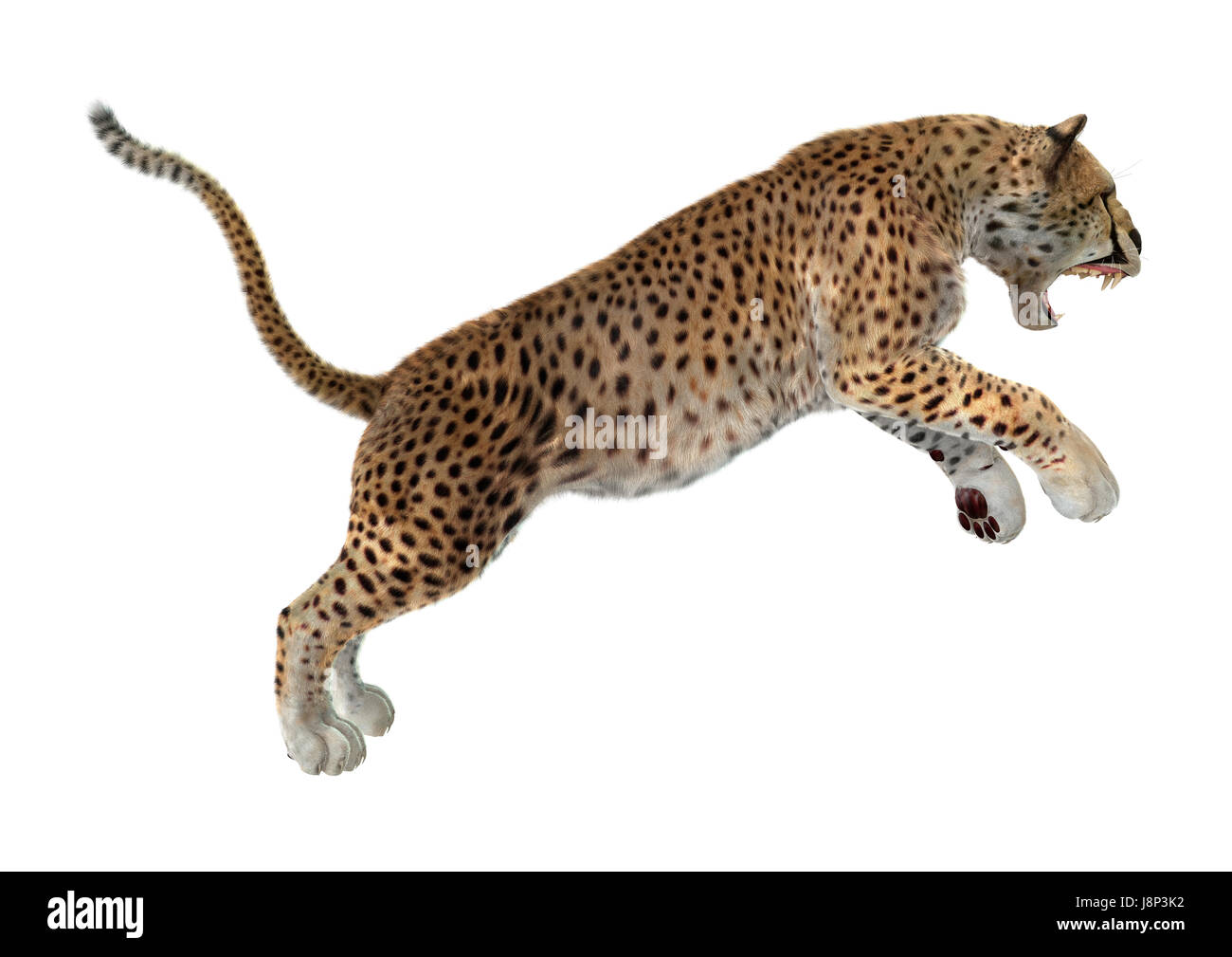 3D rendering of a cheetah jumping isolated on white background Stock Photo