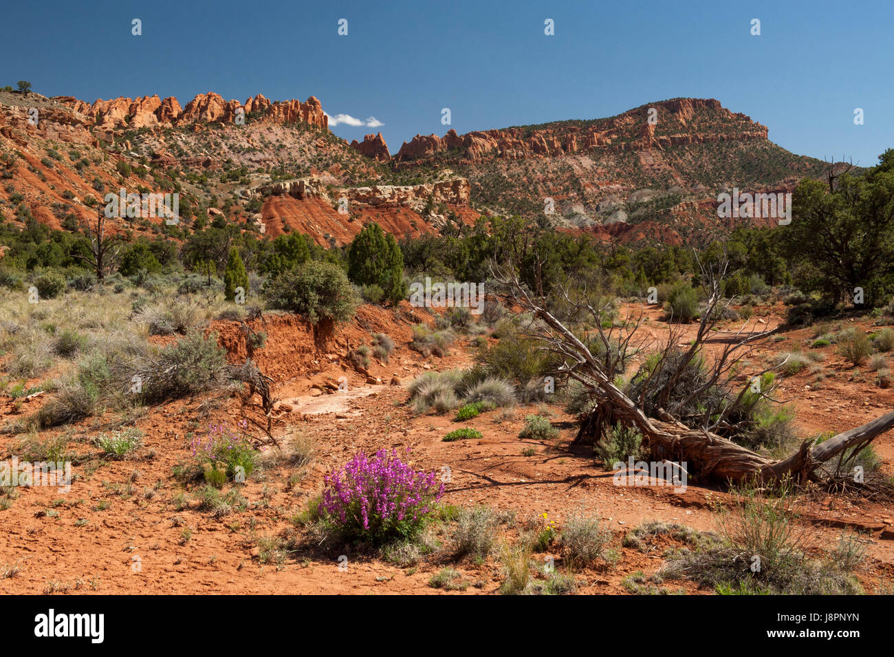 Along the South Draw 4-wheel-drive trail in Capitol Reef National Park, Utah - Stock Image