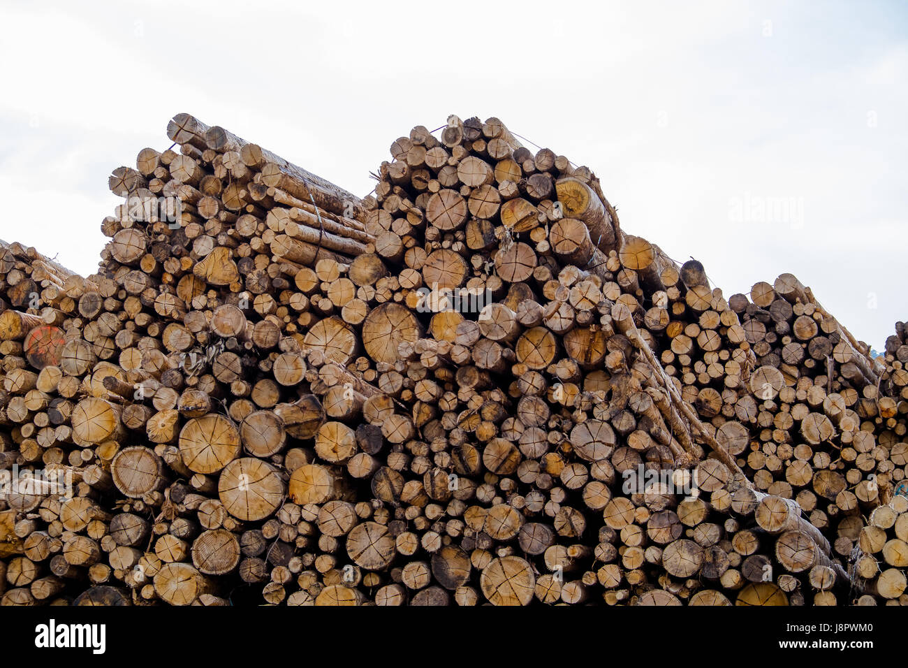 Cut Timber Stack - Stock Image