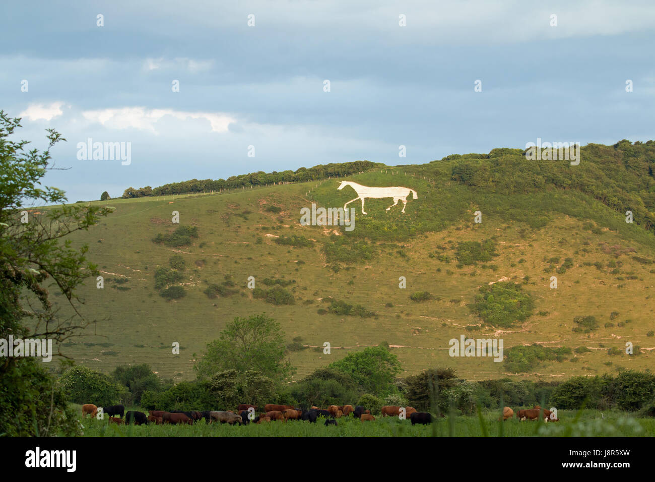 Litlington White Horse in May 2017. Chalk downland figure on South Downs on Hindover Hill. - Stock Image