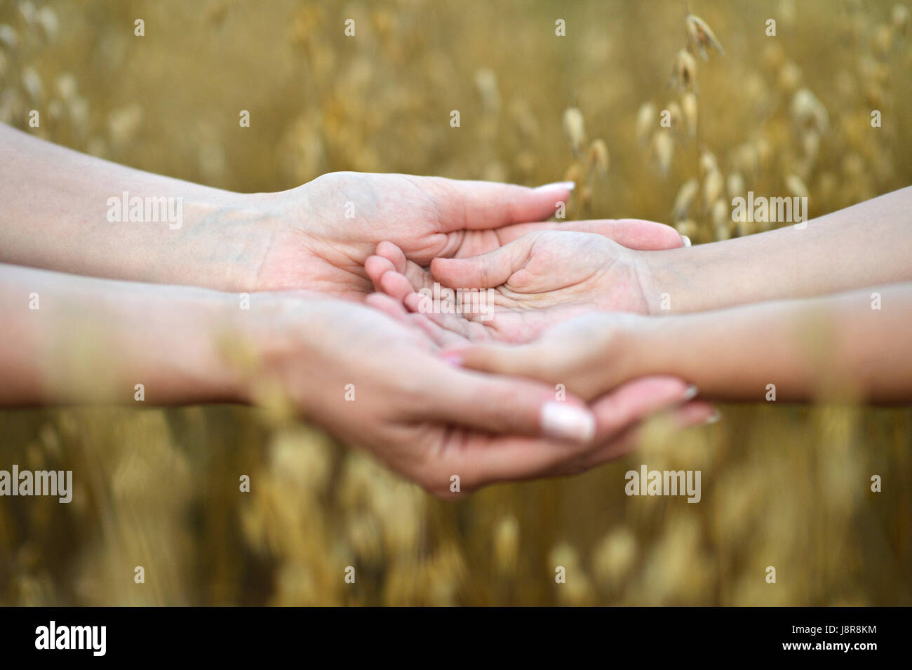 Mother holding childrens hands - Stock Image