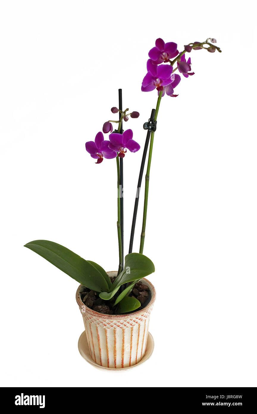 Flower Plant Flowers Flowerpot Orchid Pink Colour Flower