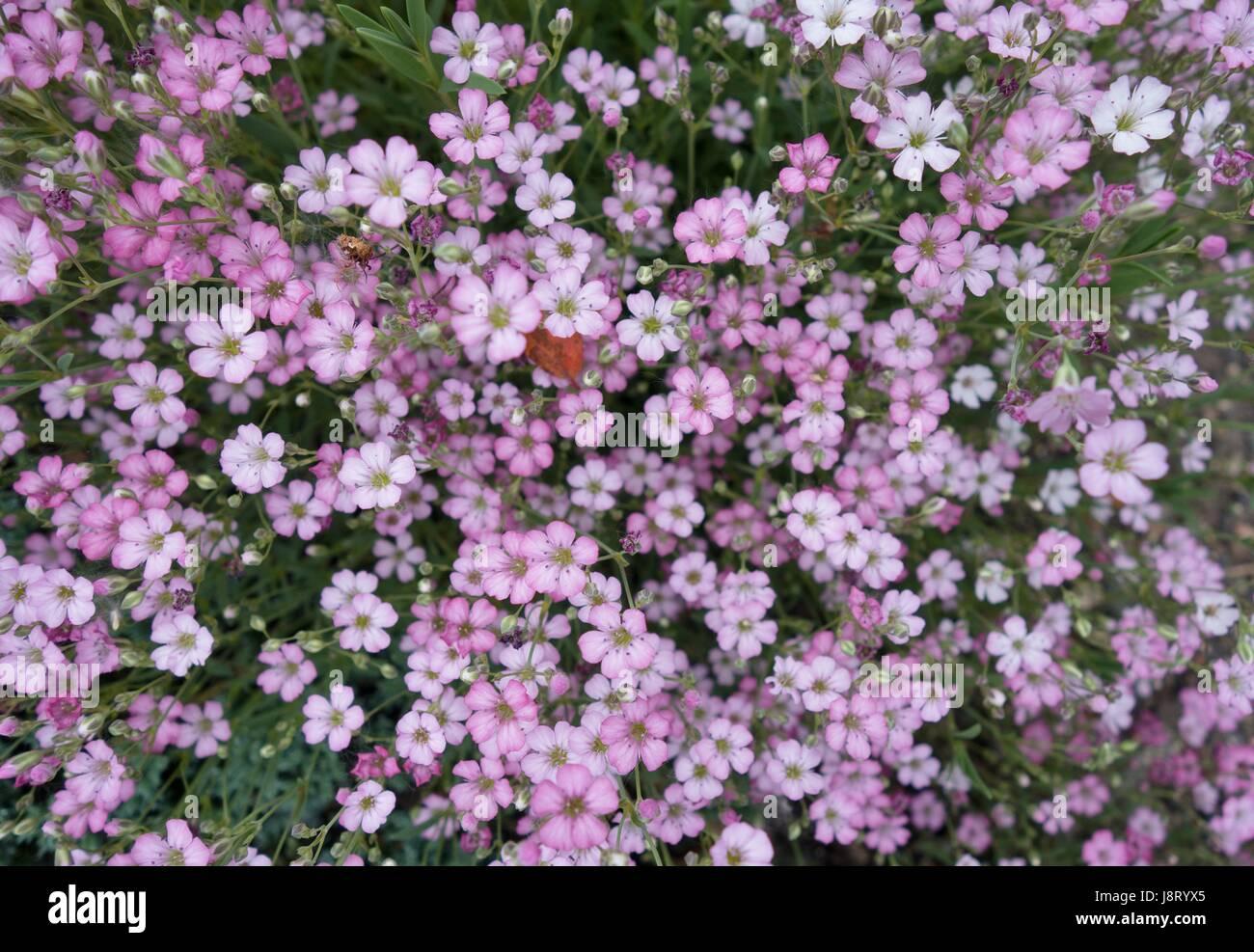 Ground cover flowers stock photos ground cover flowers stock small purple ground cover flowers stock image mightylinksfo