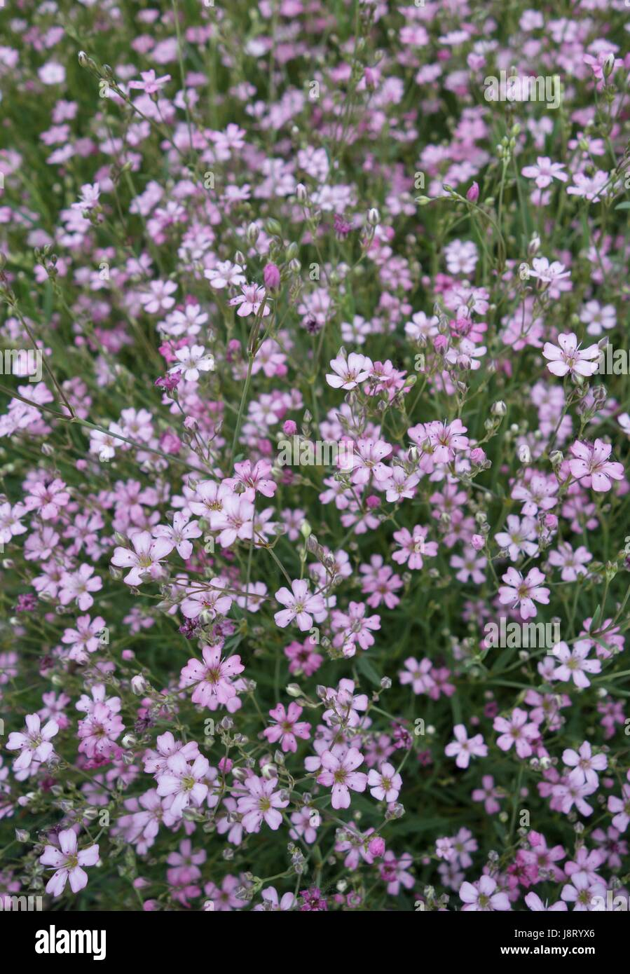 Small purple ground cover flowers stock photo 143126990 alamy small purple ground cover flowers mightylinksfo