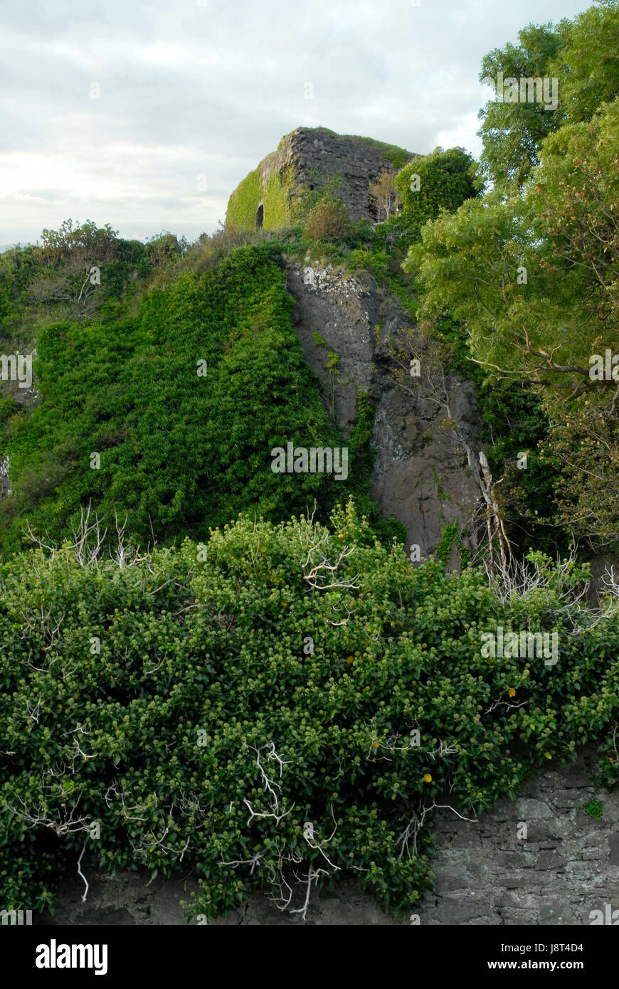 plant, ruin, scotland, history, middle ages, tower, historical, plant, towers, Stock Photo