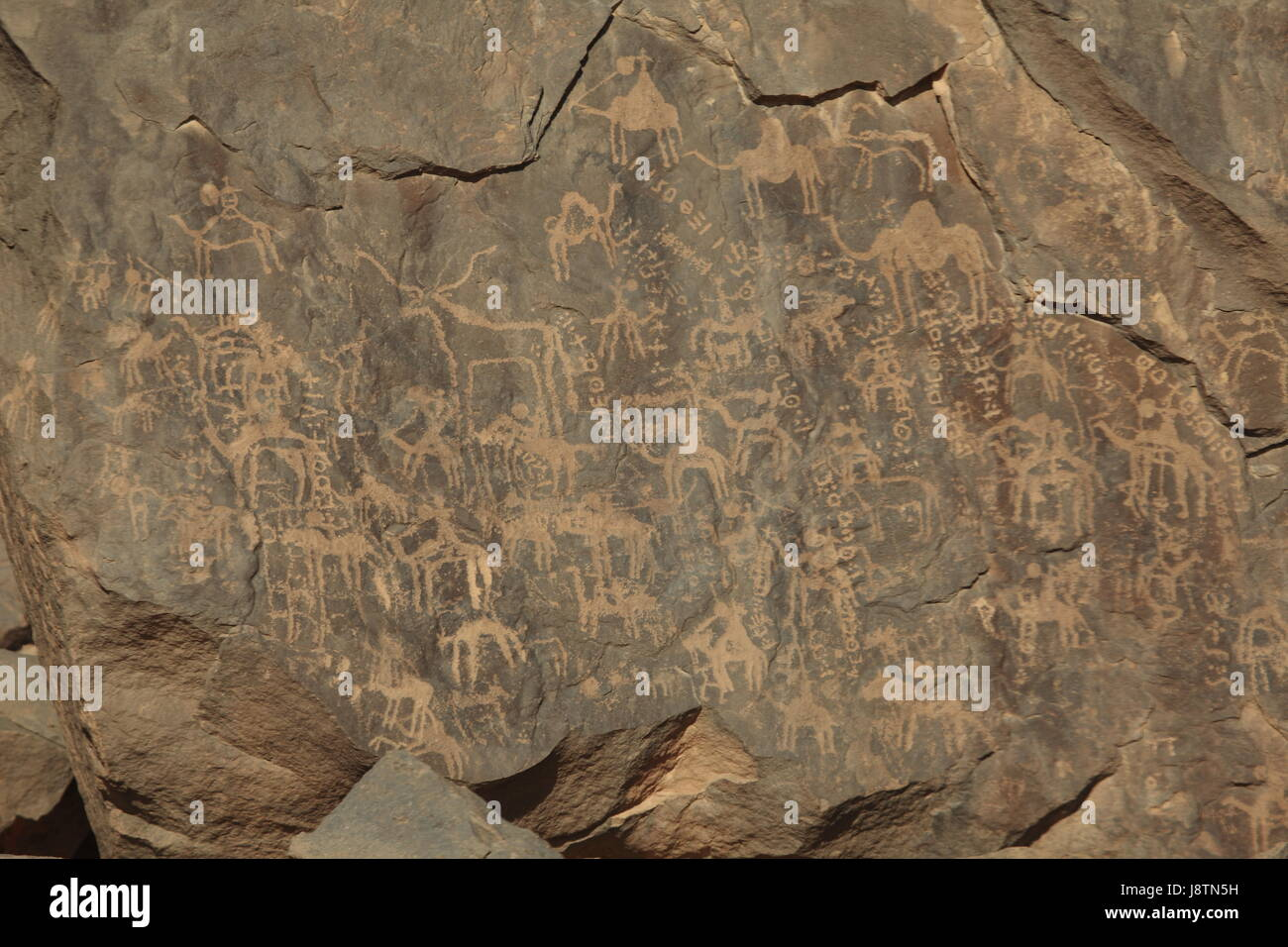 Stone age rock carvings stock photo  alamy