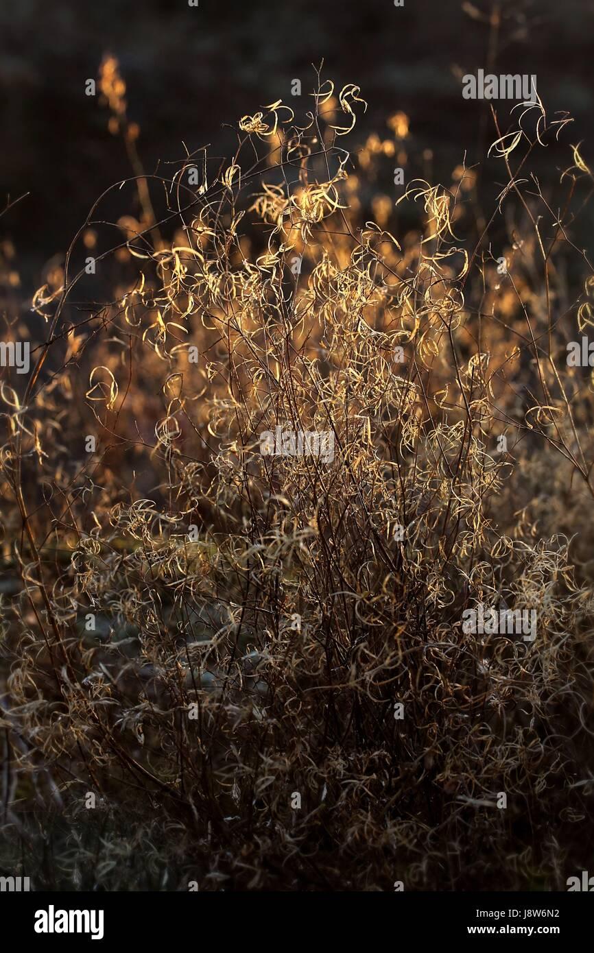 shine, shines, bright, lucent, light, serene, luminous, golden, evening light, Stock Photo