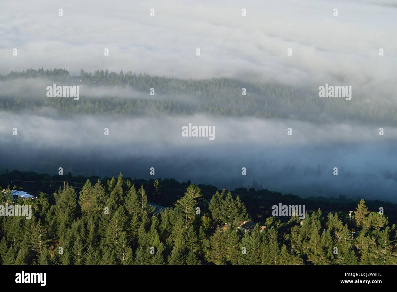 Cool Fog settles early morning over Napa Valley, CA - Stock Image