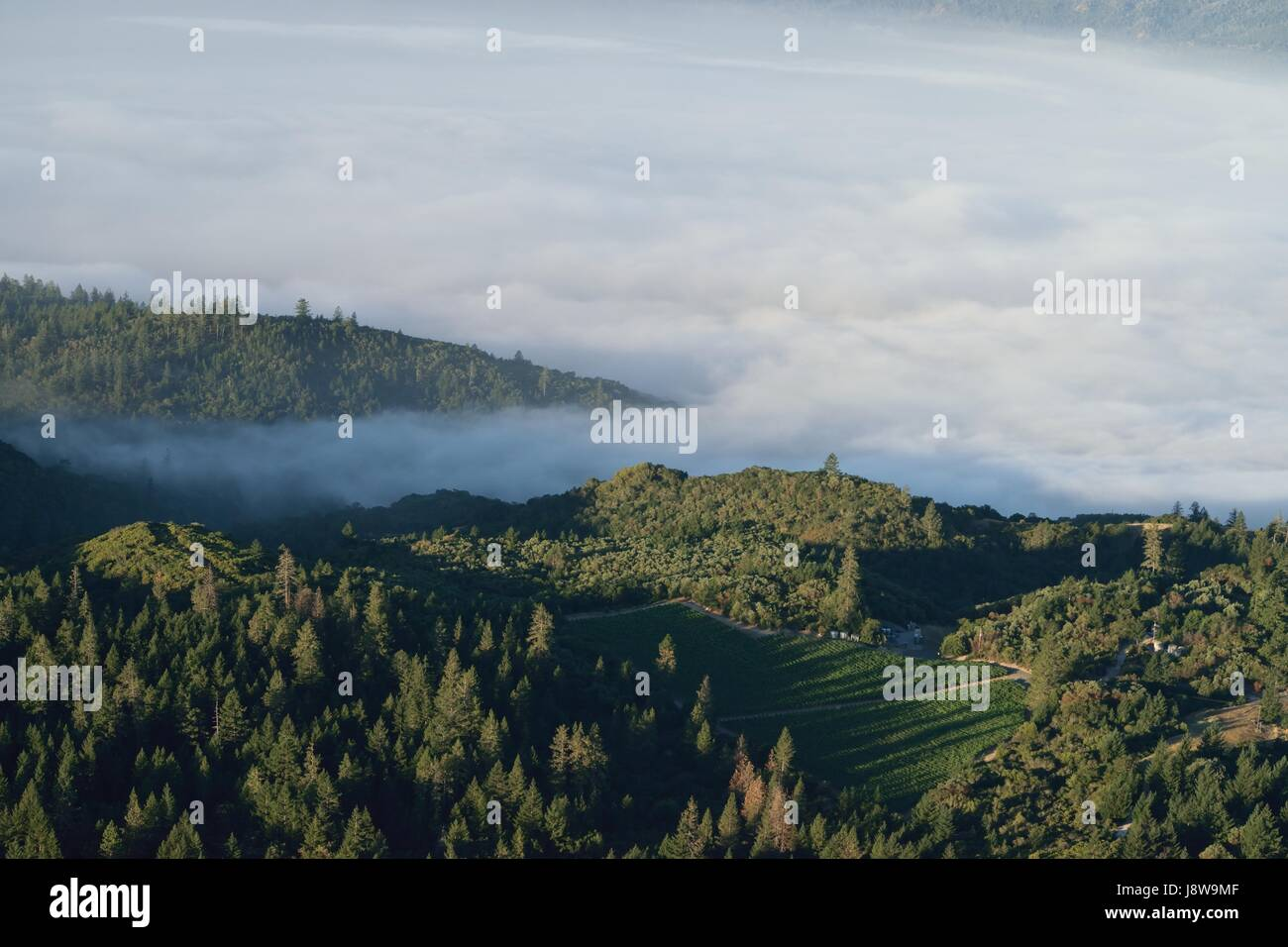Cool fog in the early morning in Napa Valley, CA - Stock Image