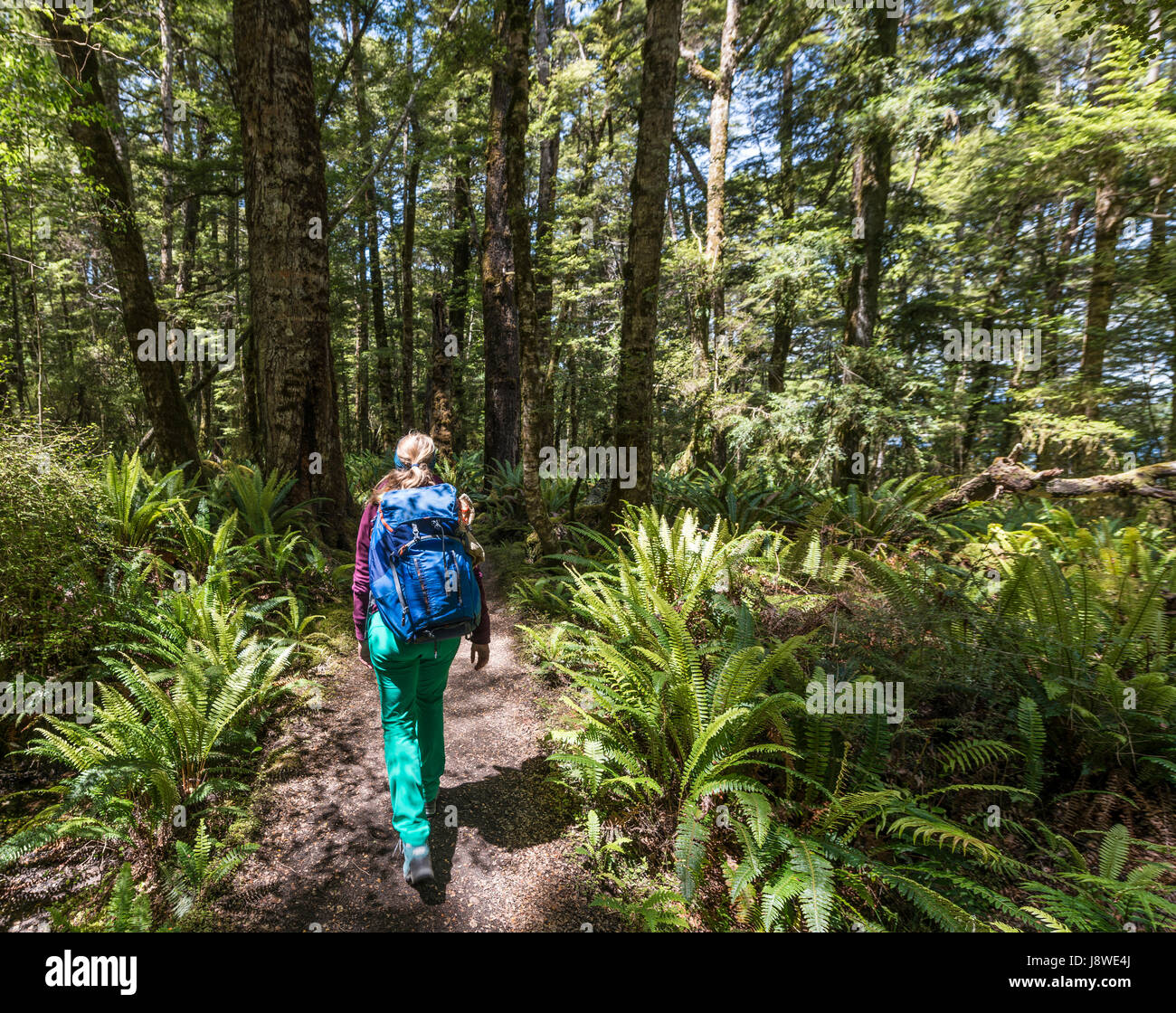 Female hiker on Kepler Track, Forest with Ferns, Fiordland National Park, Southland, South Island, New Zealand - Stock Image