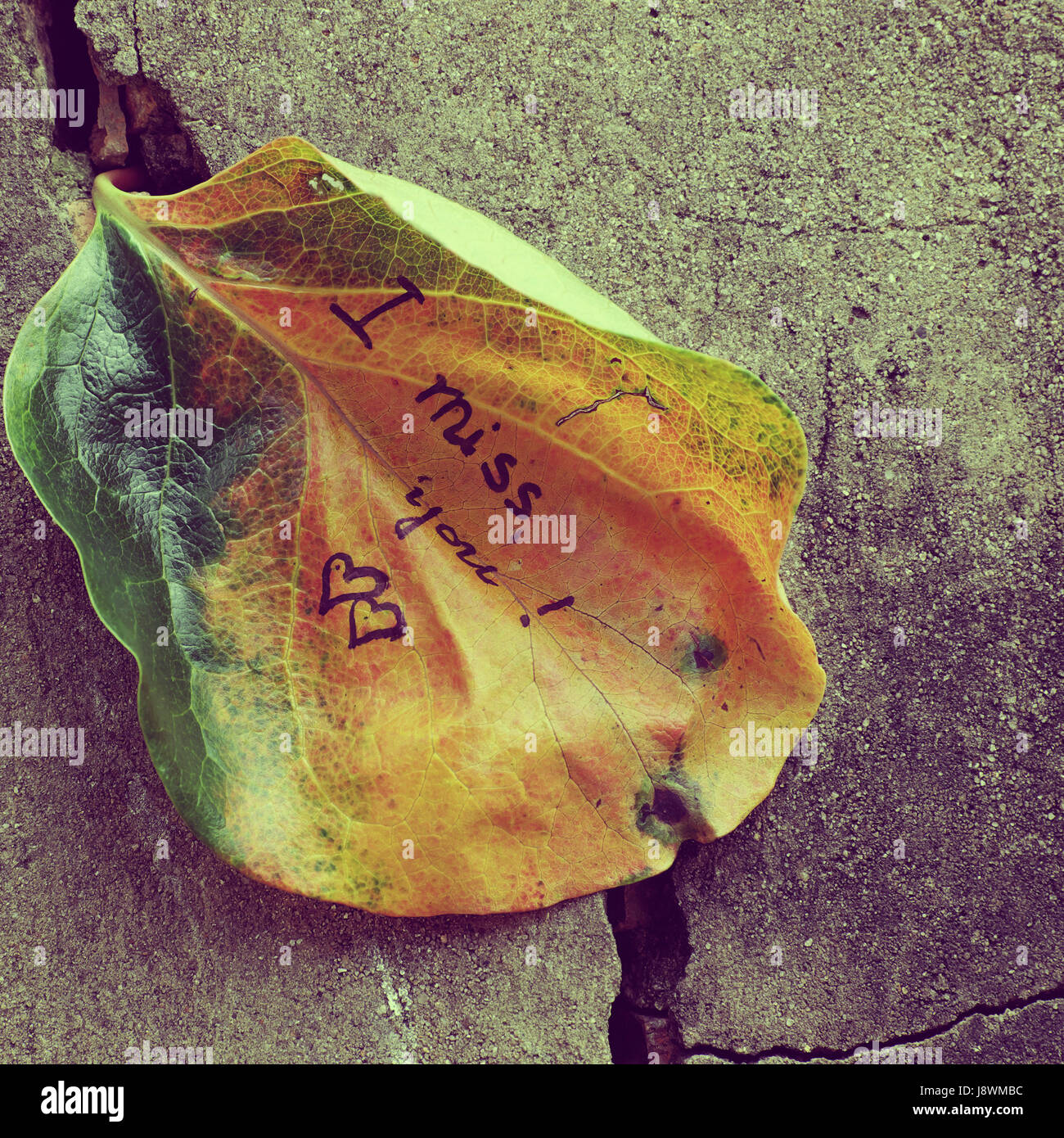 The Word I Miss You On Old Leaf Miss U Message For Far Away Lover