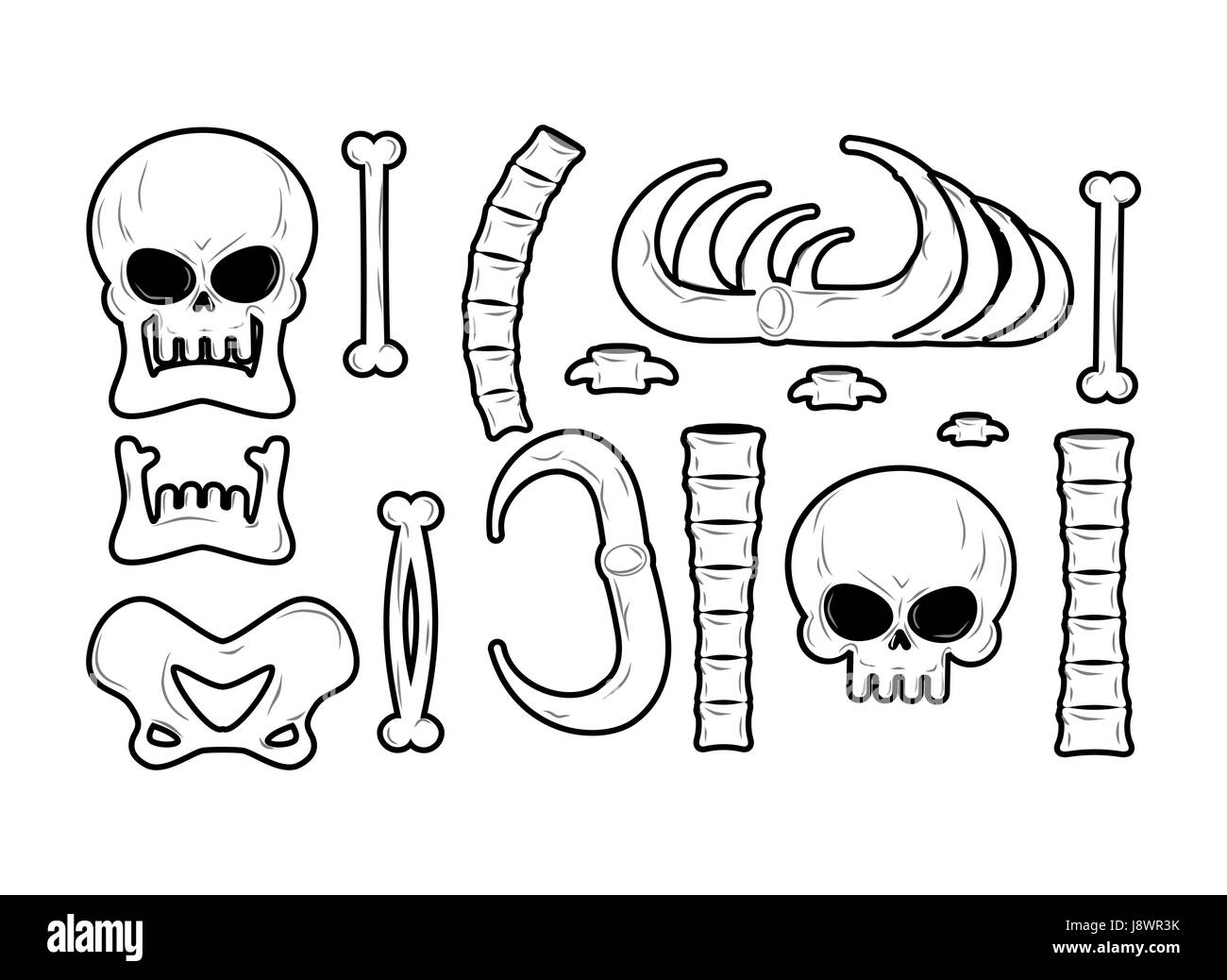 Bones set. Anatomy icons. Skull and spine. Jaw and pelvis. Ribs and ...