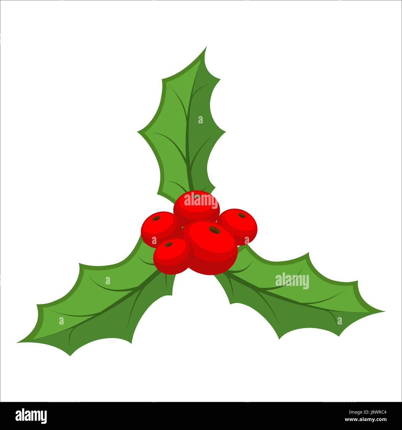 Sprig of mistletoe isolated. Traditional Christmas plant. Holiday ...