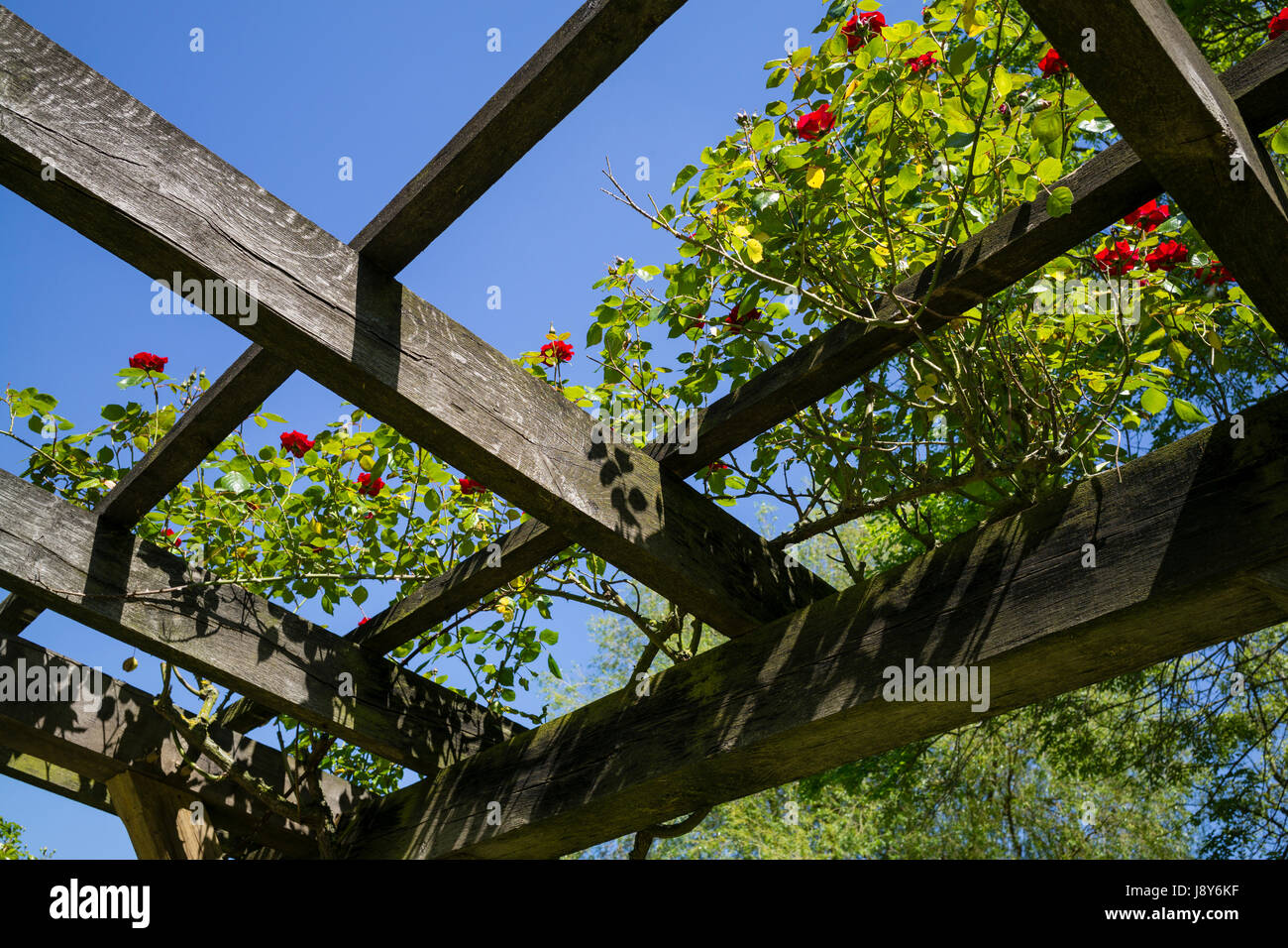 Blue Sky above the Rose Pergola in Rowntree Park, City of York, UK - Stock Image