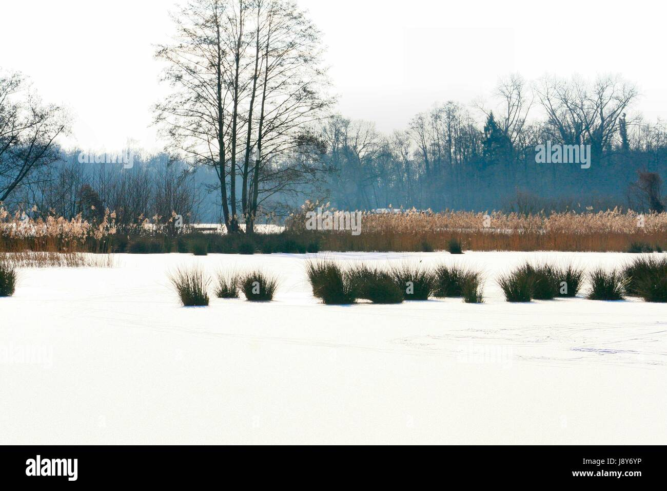de witt lake nature park schwalm nette in winter - Stock Image