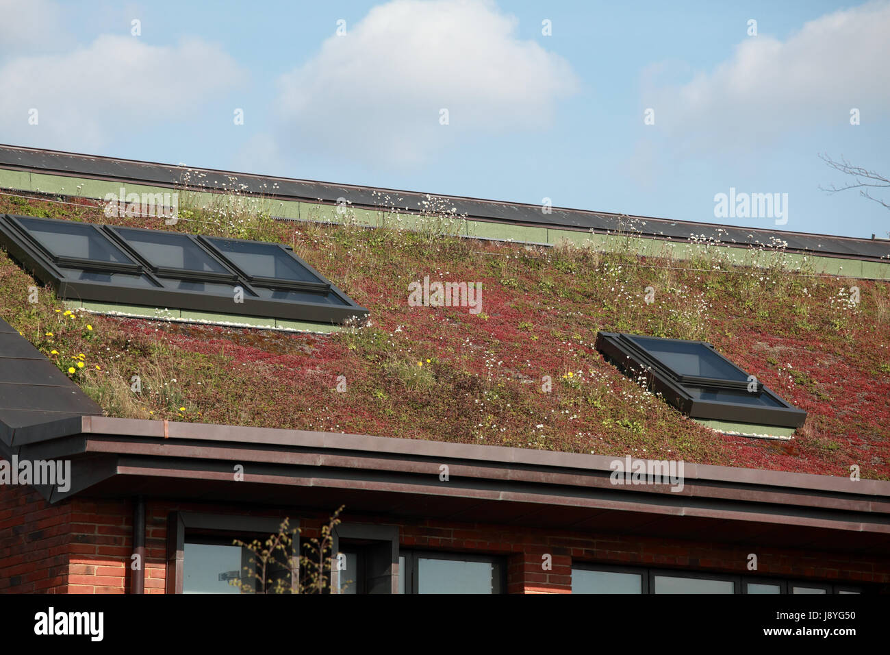 The roof of Market Drayton's low energy Police Station built with a green sedum mat and solar photovoltaic panels - Stock Image