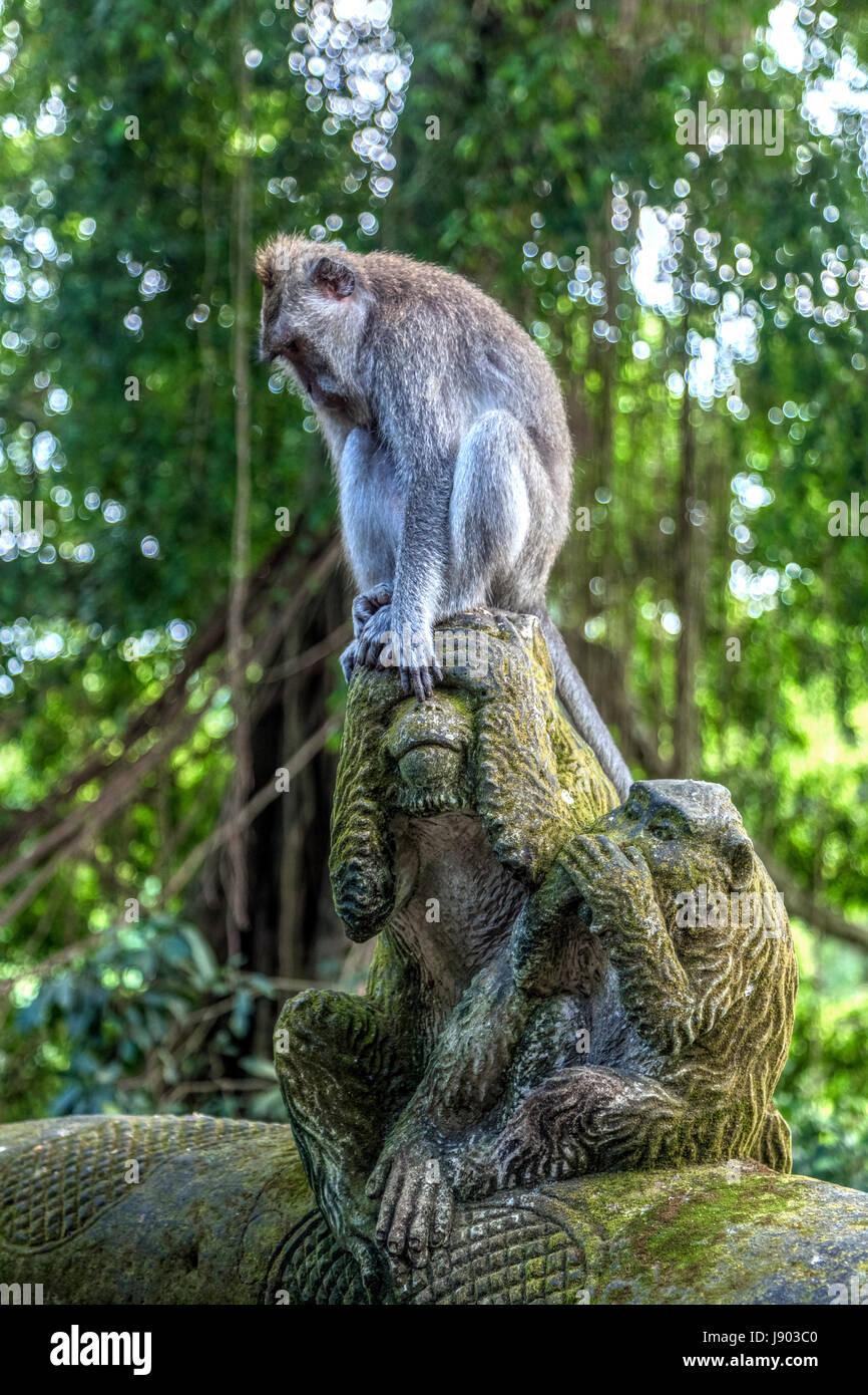 Monkey Forest, Ubud, Bali, Indonesia, Asia - Stock Image