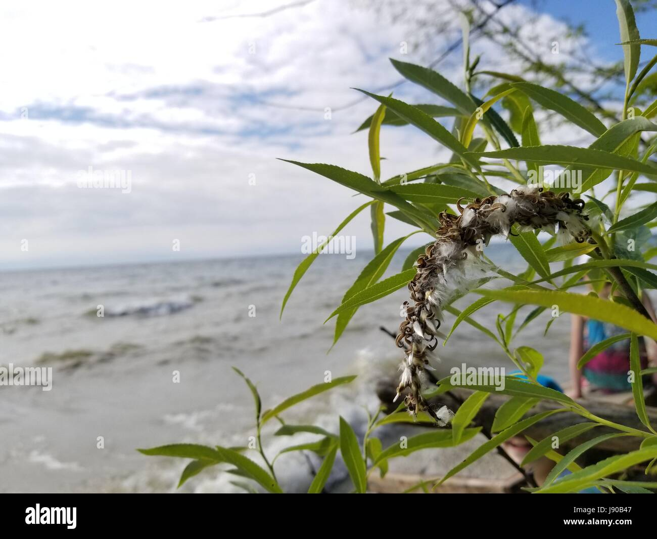 Plant by Lake Michigan on a Partly Cloudy Day - Stock Image