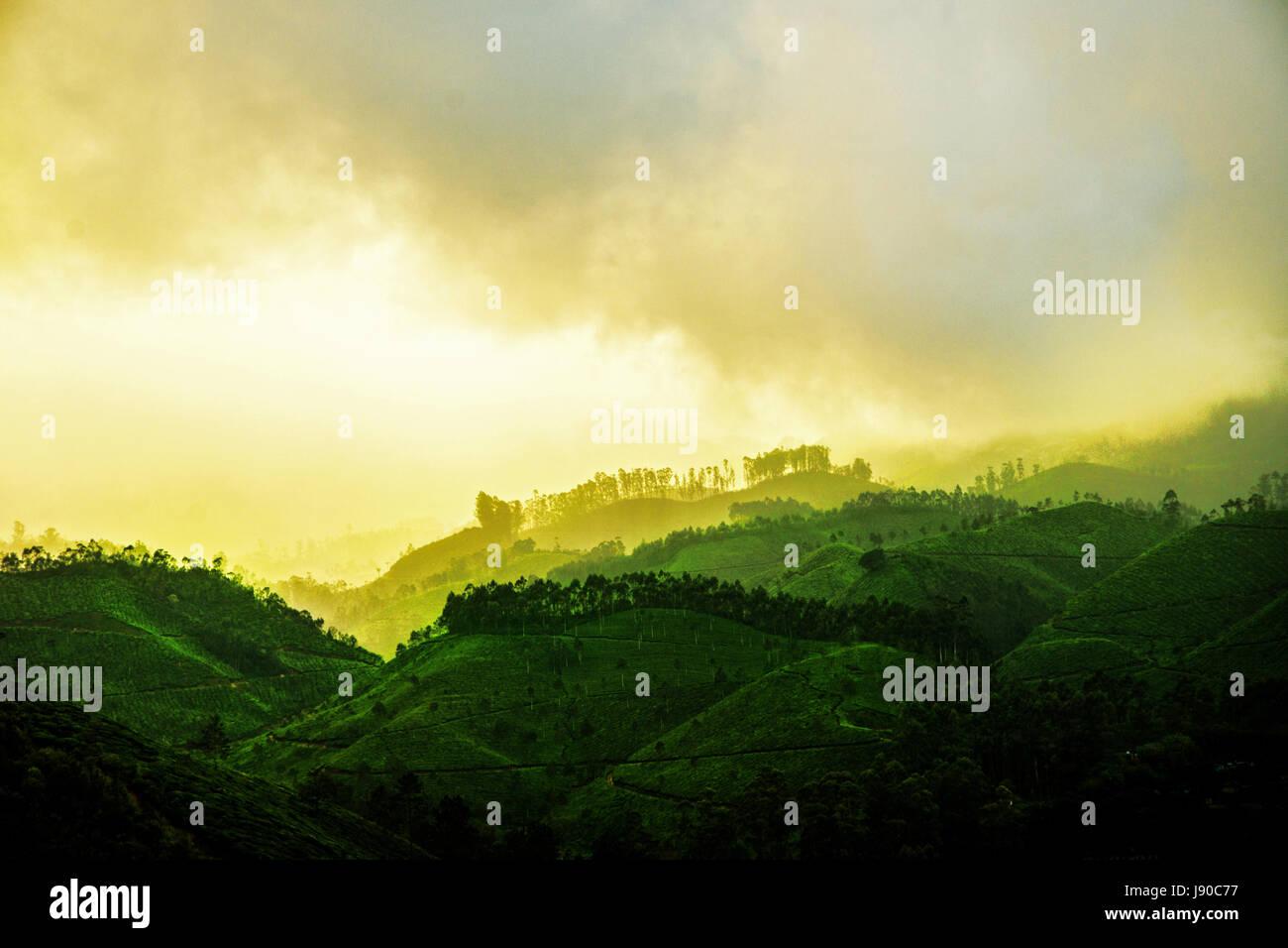 Munnar, Sunset at Tea Garden Munnar, beauty of munnar, tea garden munnar, Munnar Kerala - Stock Image