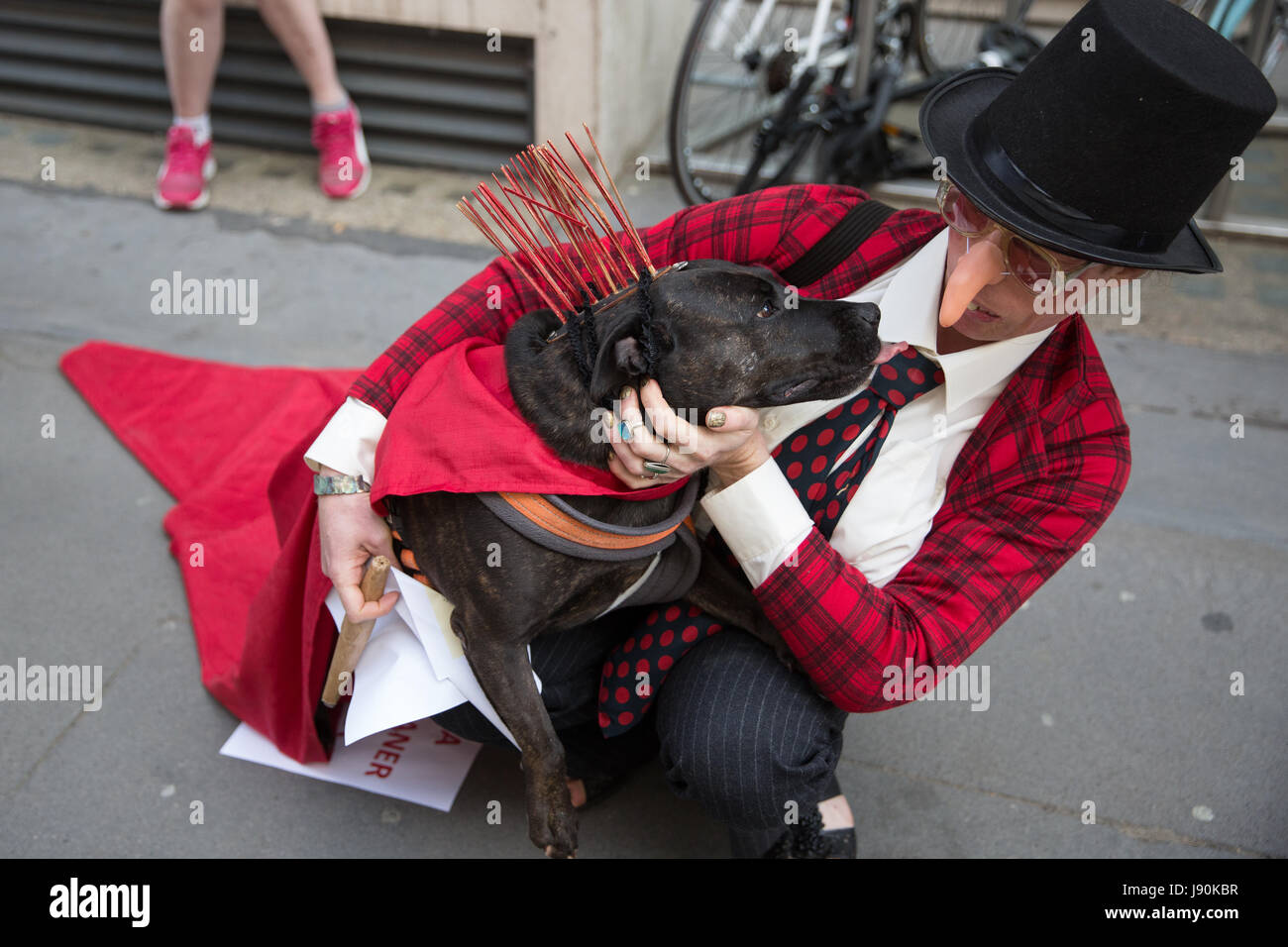 London, UK. 30th May, 2017. A dog belonging to an activist from Life Not Money protesting outside the London School - Stock Image