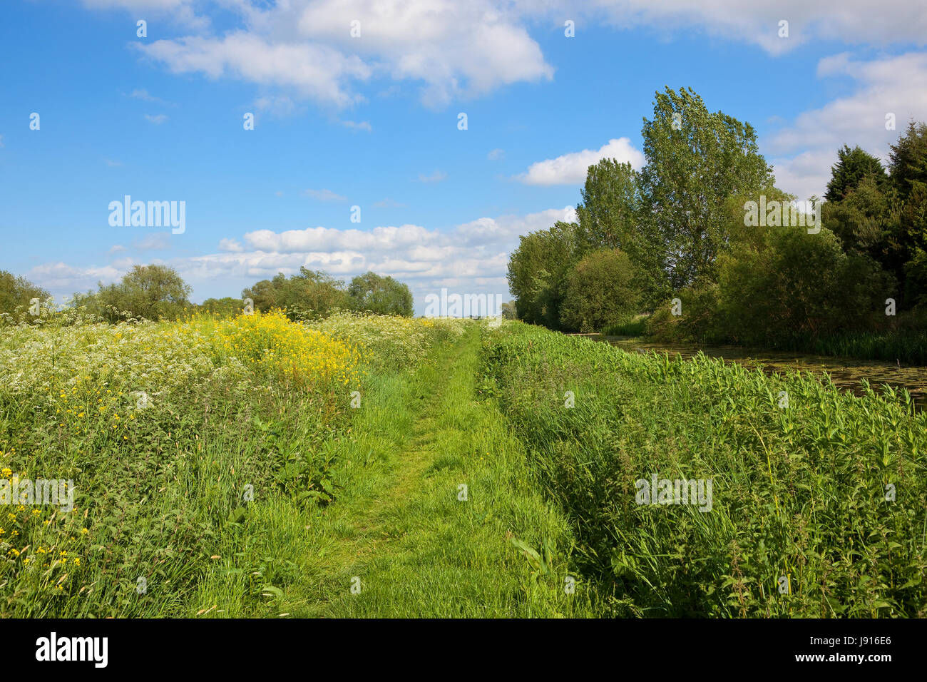 a grassy towpath and canal with woodland and wildflowers in summer under a blue cloudy sky in yorkshire - Stock Image