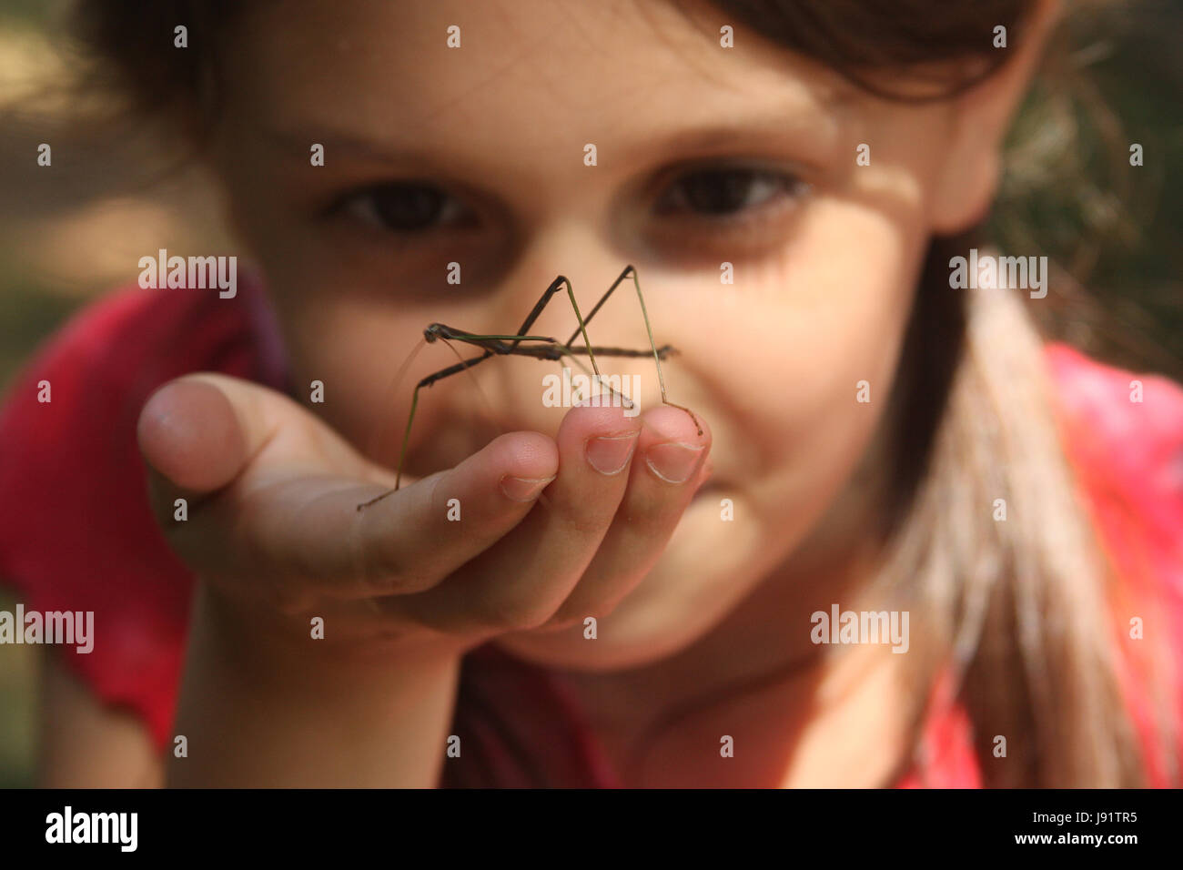 Little girl with walking stick insect in her palm - Stock Image