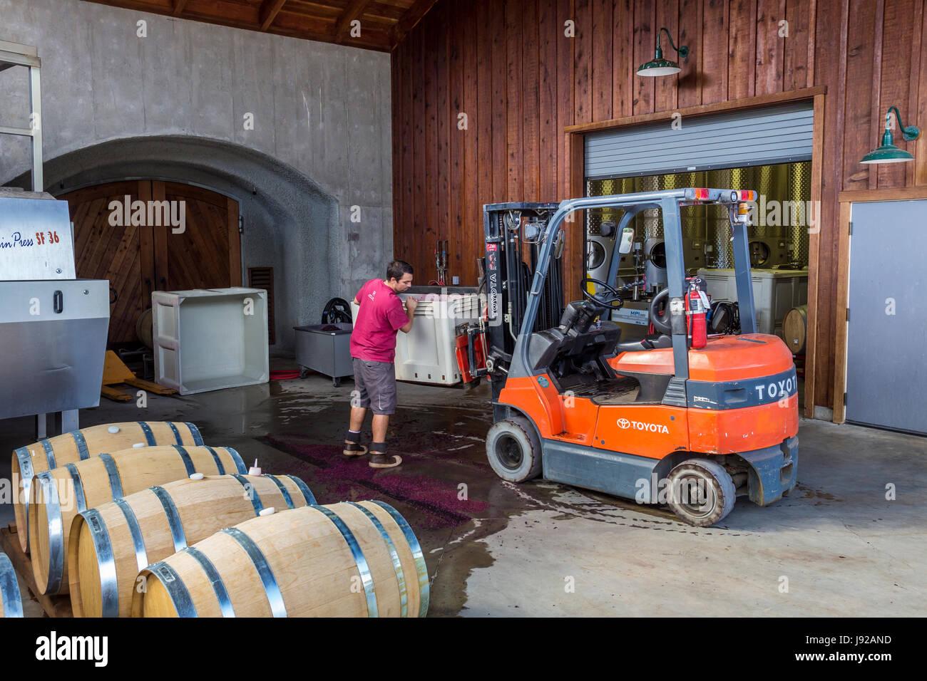winery worker, Jericho Canyon Vineyard, Calistoga, Napa Valley, California, United States - Stock Image