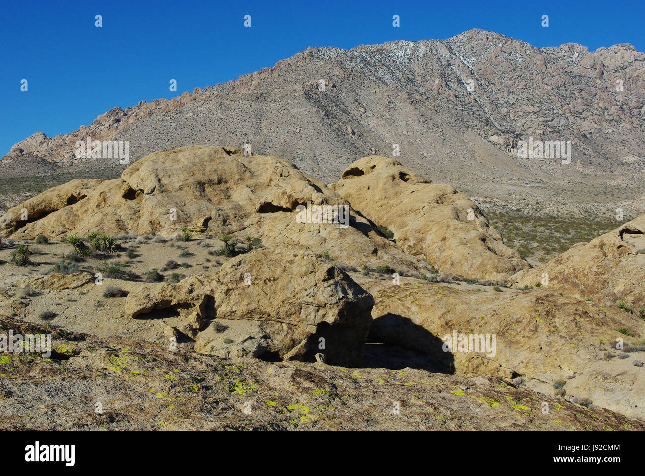 rocks and mountains near christmas tree passnevada stock image