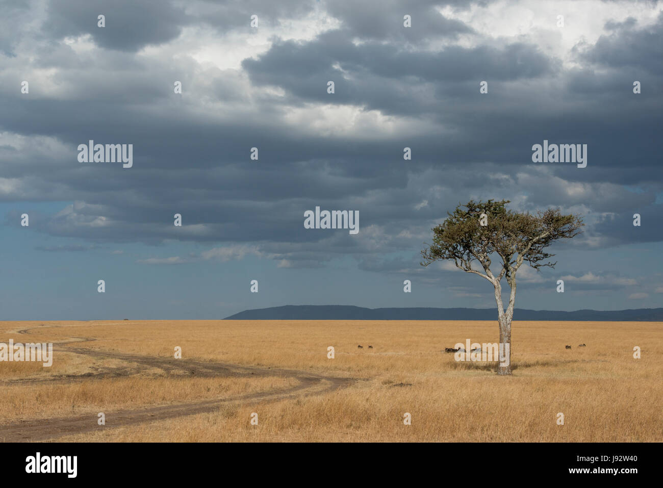 Storm Clouds over savannah - Stock Image