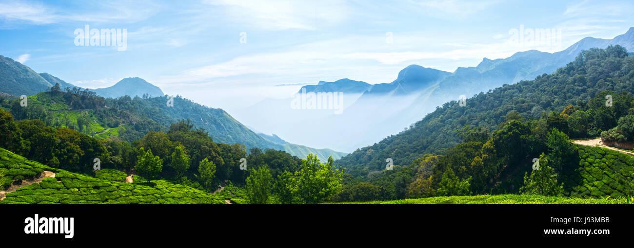 Munnar, Kerala, Western Ghats, Tea Garden, Munnar, tea garden munnar, munnar kerala, Kerala Tourism, Sunrise in - Stock Image