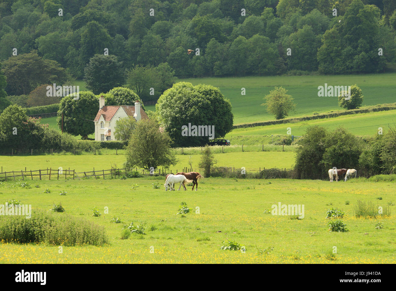 An English Rural Landscape in the Hambleden Valley in the Chiltern Hills with grazing horses - Stock Image