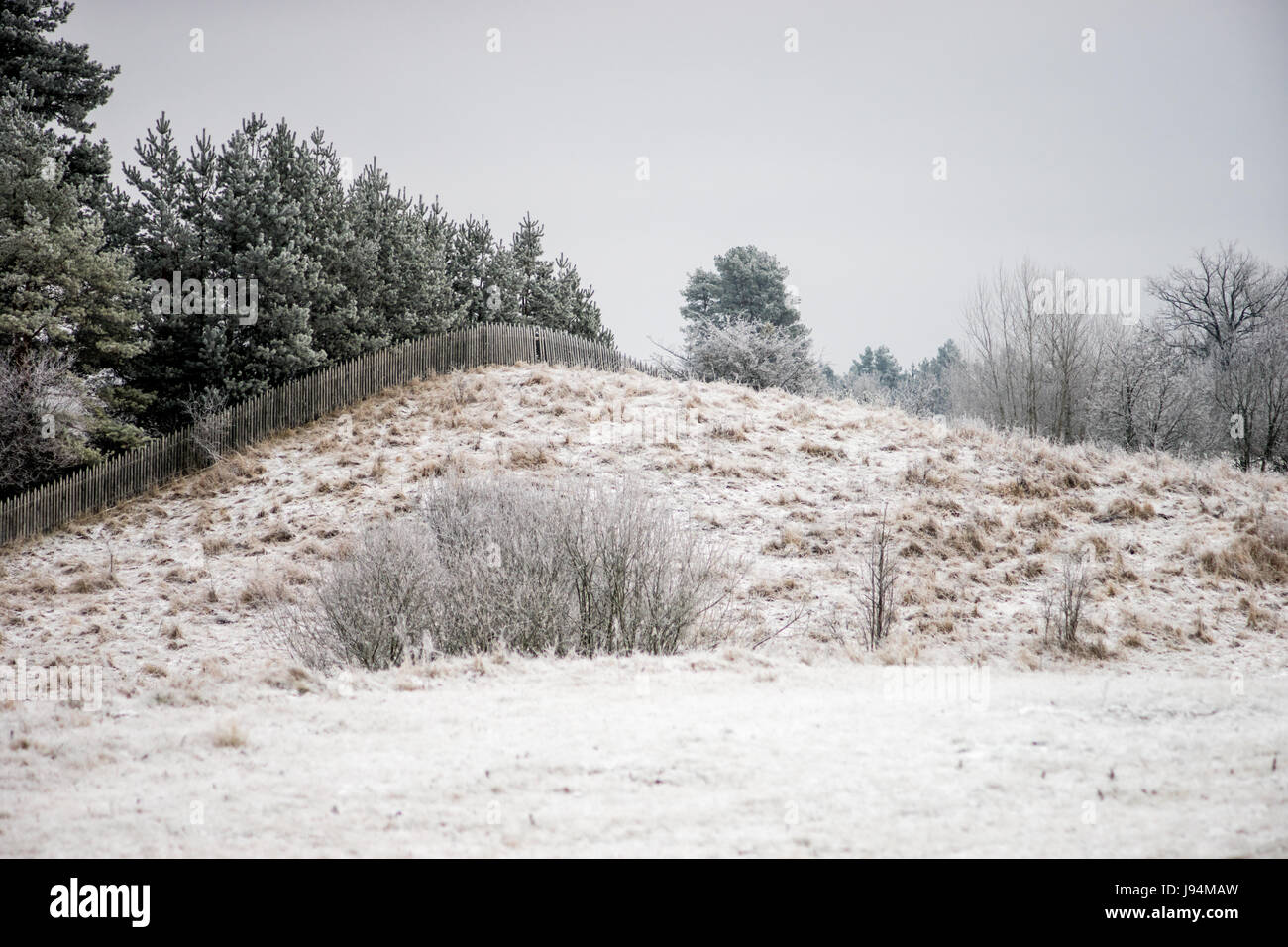 Frosted fields and forest - Mazury Poland - Stock Image