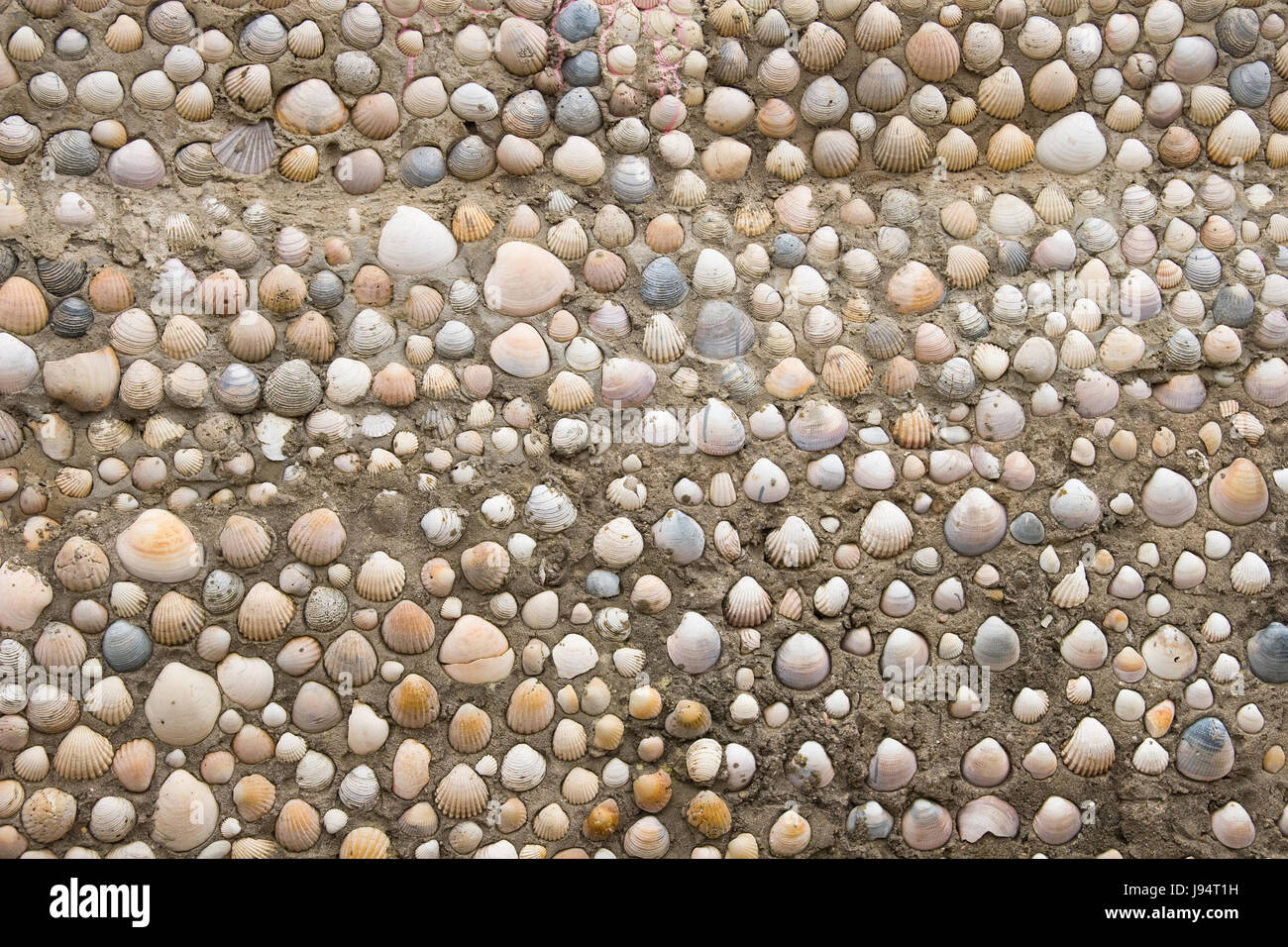 arrangement, object, colour, stone, shell, look, glancing, see, view, looking, Stock Photo