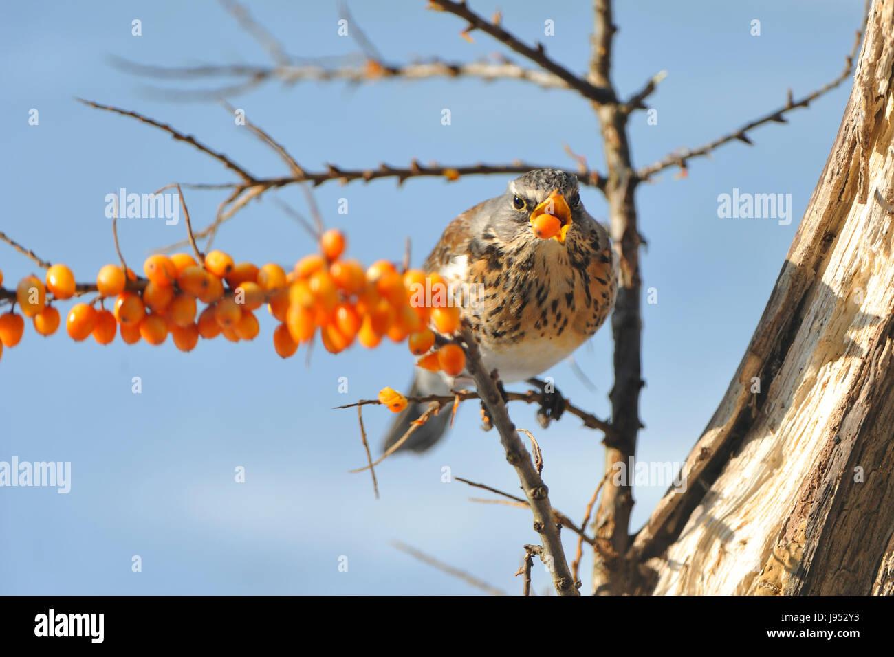 winter, winter, bird, snow, coke, cocaine, material, drug, anaesthetic, Stock Photo