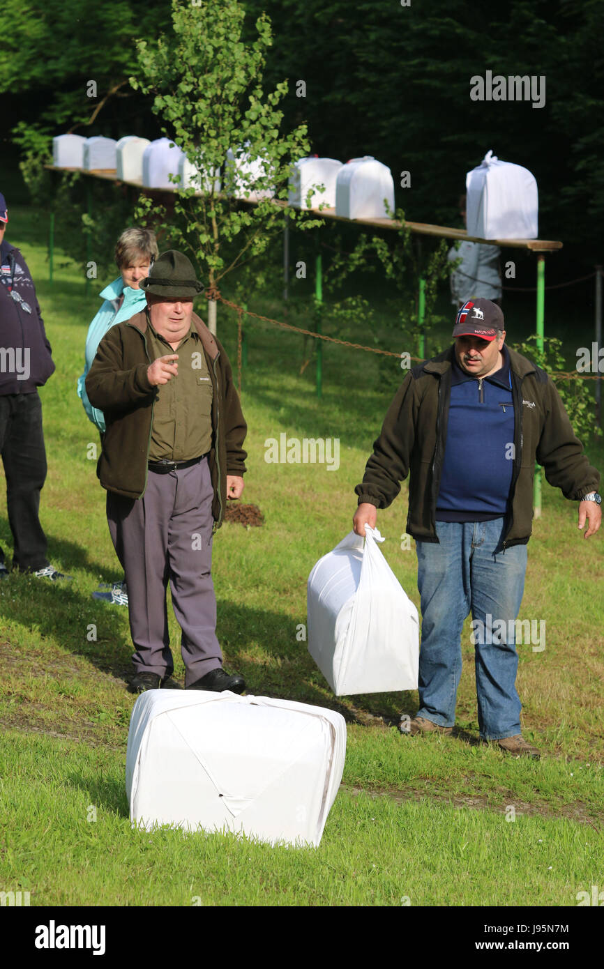 Benneckenstein, Germany. 5th June, 2017. Visitors next to birdcages containing chaffinches in Benneckenstein, Germany, - Stock Image