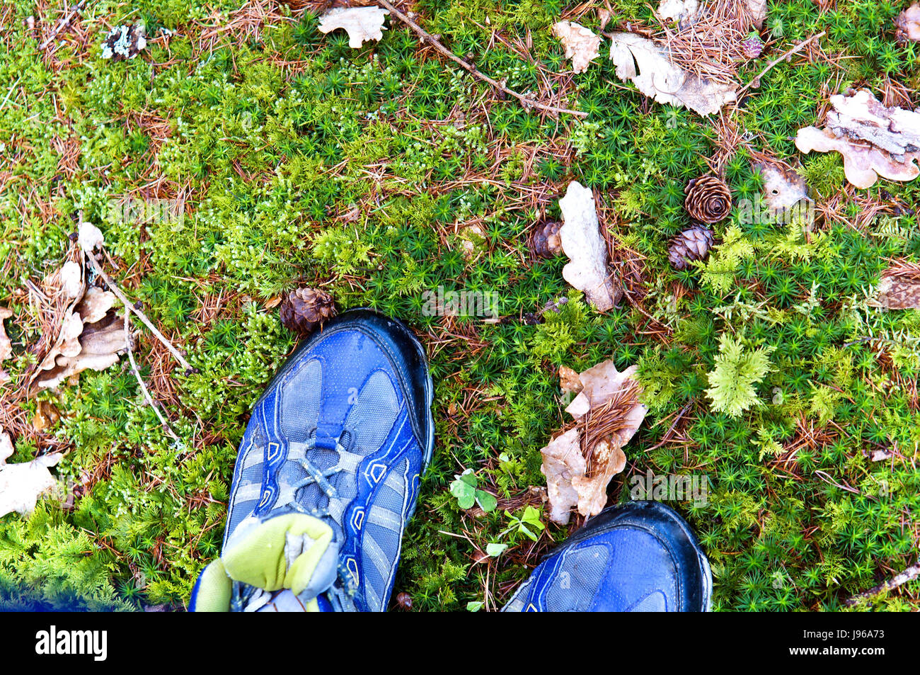 standing on the stone covered with green sphagnum moss - Stock Image