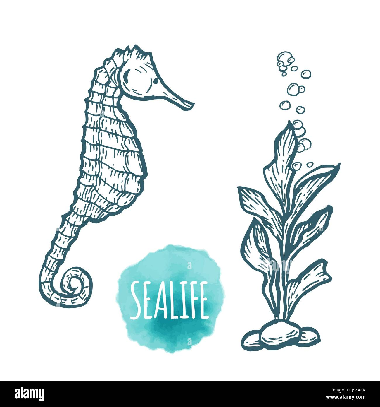 Sea Horse Drawing On White Background Hand Drawn Seafood Stock Vector Image Art Alamy