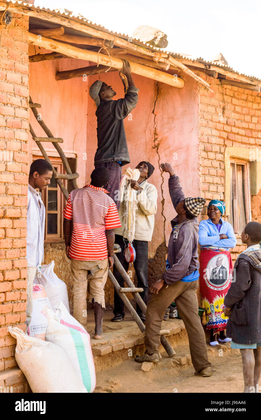 Men using home made ladder to hang scales to weigh sacks of maize for sale to a trader in the rural village of Chiphazi - Stock Image
