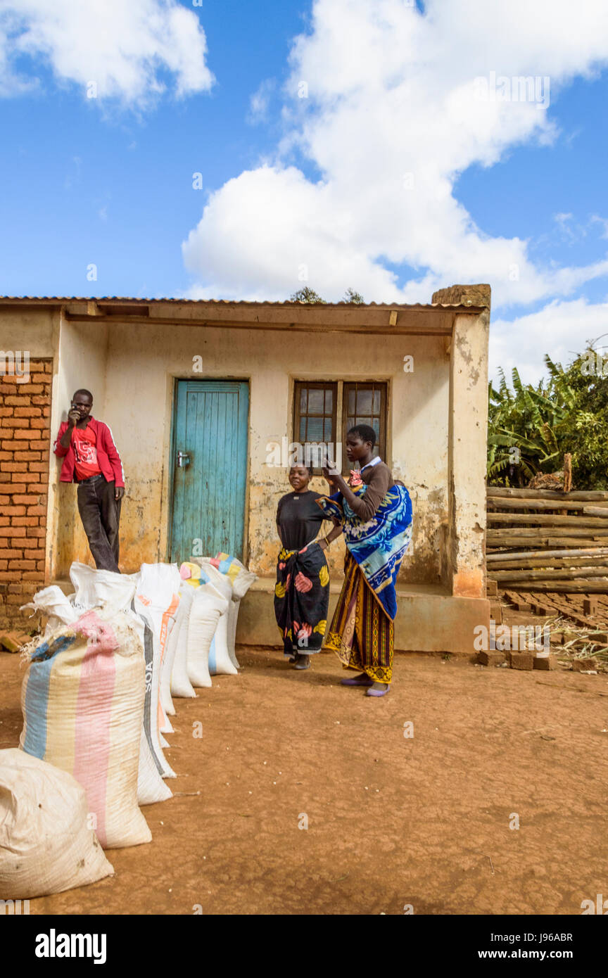 Three people selling sacks of maize to a trader in Chiphazi, near Dedza, Malawi, Africa outside his traditional - Stock Image